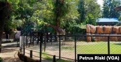 Kondisi kandang Jerapah di Kebun Binatang Surabaya saat penutupan (Foto: VOA/ Petrus Riski).