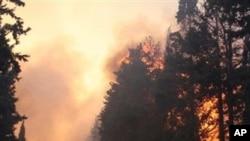 اسرائیل: جنگل کی آگ سے 40 افراد ہلاک