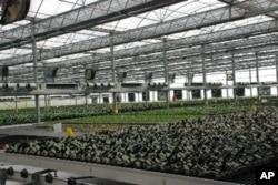 裁培蝴蝶蘭的全自動環控溫室