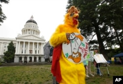 "Dressed as the ""Real Chicken Don,"" Shawn Frye joins others in calling for President Donald Trump to release his tax returns, at the Capitol in Sacramento, Calif., April 12, 2017.Tax March Sacramento activists planned to join others in a protest on Tax Day, April 15."