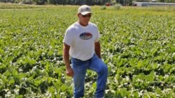 A farmer walks through a field of Roundup sugar beets grown on private land near Longmont, Colorado in this photo from 2006.