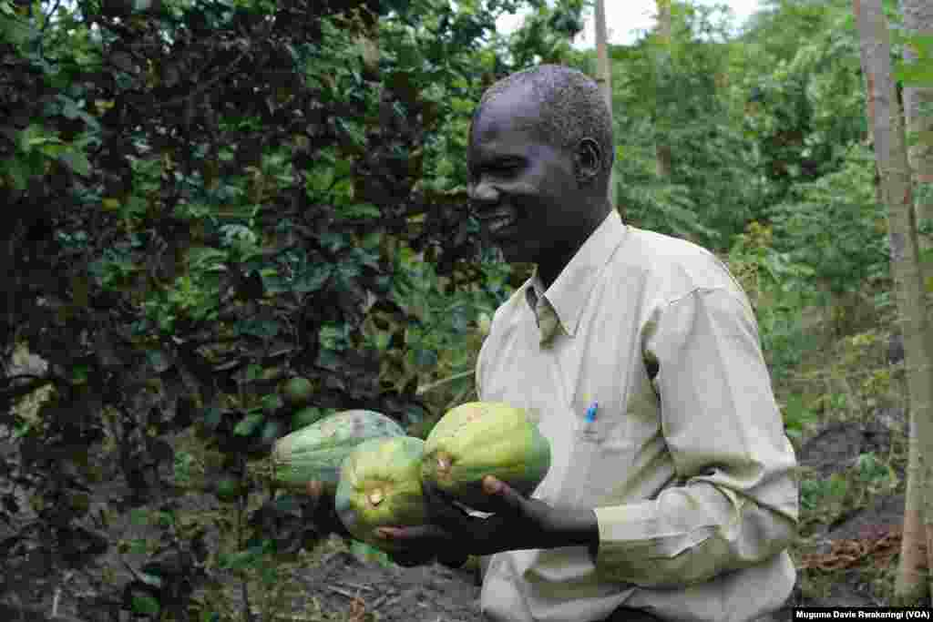 Sebit Amusa Tongun holds organic papayas he grew on a five-acre plot near Juba.