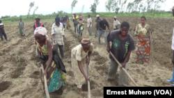 Le travail en équipe entre population vulnérable et ex combattants à Uvira, le 3 janvier 2018. (VOA/Ernest Muhero)