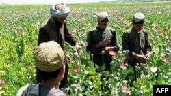 Phần lớn thuốc phiện được trồng ở miền nam và miền tây Afghanistan