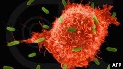 Американские ученые разработали новую методику диагностики рака