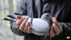 El alimento, producido en Alemania, no es nocivo para la salud de las palomas ni para ningún otro animal.
