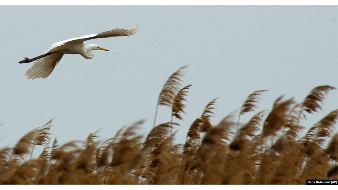 A White Heron,' by Sarah Orne Jewett