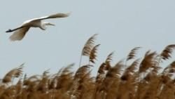 Quiz - A White Heron by Sarah Orne Jewett
