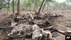Dans cette photo Février 2012 publié par Boubandjida Safari Lodge, les carcasses d'éléphants abattus par des braconniers sont vus dans le parc national Boubou Ndjida, situé au Cameroun, près de la frontière avec le Tchad. Poachers have slaughtered at least 200 elephants