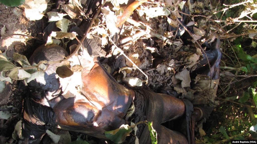 Vala comum na Gorongosa
