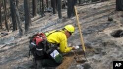 Một nhà khoa học đang lấy xem các mẫu đất trong khu vực bị cháy, 16/9/13. Sở Lâm nghiệp tiên liệu hỏa hoạn sẽ được khống chế hoàn toàn vào thứ Sáu này
