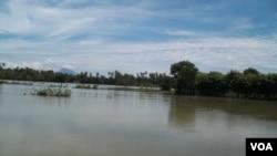 Banjir yang menggenangi beberapa wilayah sentra produksi pertanian di Aceh. (Foto: Budi Nahaba, 7/11/2014).