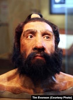 مدلی از یک مرد نئاندرتال - موزه تاریخ طبیعی اسمیتسونین - واشنگتن دی سی