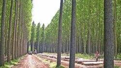 افزایش روند جنگل زدایی ایران در سال جنگل ها