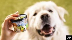 This photo provided by Ben & Jerry's shows Ben & Jerry's dog treats. The venerable Vermont ice cream company said Thursday, Jan. 7, 2021, it's introducing a line of frozen dog treats, its first foray into the lucrative pet food market.