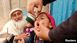 FILE - A child receives a polio vaccination during an anti-polio campaign on the outskirts of Jalalabad, March 16, 2015.
