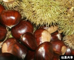 Chestnuts are low in fat and high in fiber.