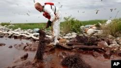 Seorang pekerja membersihkan tumpahan minyak di Teluk Meksiko di Plaquemines Parish, Louisiana, AS (foto: dok).