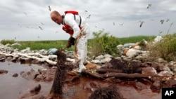 عملیه پاک کردن آب از تیل با جالی های مخصوص در نزدیکی خلیج مکسیکو در سواحل ایالت لوزیانای ایالات متحده