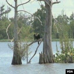 Privremenim moratorijumom na bušotine u Meksičkom zaljevu se žele zaštiti bogati prirodni resursi u delti Mississippija i dalje uz obale Zaljeva od budućih nesreća