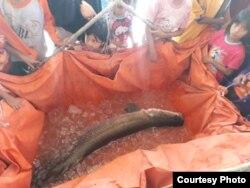 Ikan Arapaima yang tertangkap jadi tontonan warga (Foto courtesy: Ecoton).