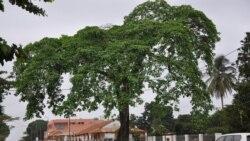 Falta tudo na Kibala provincia do Zaire - 1:49