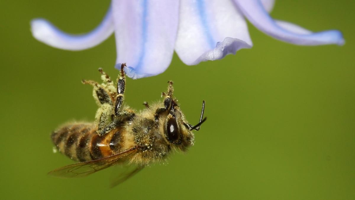 Global Warming Causes Previous Pollen Season
