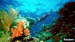 ນັກທ່ອງທ່ຽວຄົນໜຶ່ງລອຍນ້ຳຢູ່ແນວປະກາລັງ Great Barrier Reef.