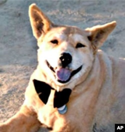 For more than 17 years, Baxter was Melissa Joseph's companion and best friend