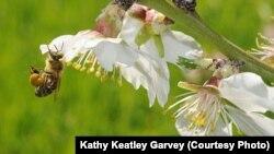 El plan incluye la creación de más terrenos federales amigables para el desarrollo de las abejas.