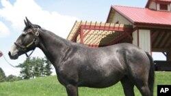 参加过基因组项目的一匹良种马