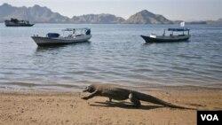 Dengan masuknya Pulau Komodo sebagai salah satu dari tujuh Keajaiban Dunia Baru, diharapkan akan makin banyak mendatangkan wisatawan ke pulau ini dan mengembangkan ekonomi masyarakat setempat (foto: dok).
