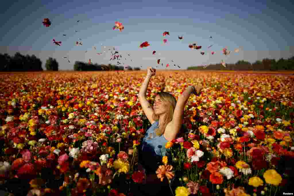 A woman poses for a photographer in a buttercup flower field near Kibbutz Nir Yitzhak in southern Israel, just outside the Gaza Strip.