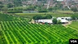 El Departamento del Valle del Cauca en Colombia, donde se registro el sismo este lunes, es un fuerte productor agrícola.