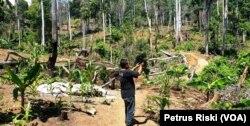 Kerusakan hutan lindung Sendiki di Malang selatan terjadi akibat pembiaran oleh negara (Foto: VOA/ Petrus Riski).