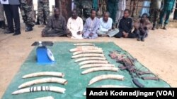 Les six braconniers présumés arrêtés au Tchad, à N'Djamena, le 26 août 2019. (VOA/André Kodmadjingar).