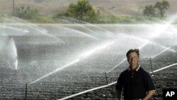 스프링쿨러로 수분을 공급하는 미 캘리포니아 주의 광활한 농장