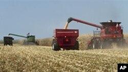 미국 농장의 옥수수 수확 (자료사진)