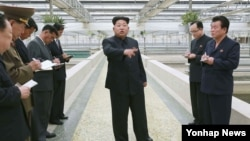 김정은 북한 국방위원회 제1위원장이 대동강 자라공장을 현지지도했다고 조선중앙통신이 19일 보도했다.
