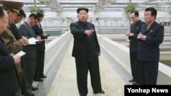 지난달 19일 김정은 북한 국방위원회 제1위원장이 대동강 자라공장을 현지지도하고 있다. (자료사진)