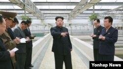 រូបថតឯកសារ៖ មេដឹកនាំកូរ៉េខាងជើង Kim Jong Un ផ្តល់ការណែនាំដល់ក្រុមមួយឈ្មោះថា Taedonggang Terrapin Farm នៅក្រុងព្យុងយ៉ាង។