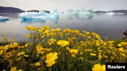 FILE- Wildflowers bloom on a hill overlooking a fjord filled with icebergs near the south Greenland town of Narsaq, July 27, 2009.
