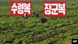 Ожидаемая реформа сельского хозяйства должна была накормить народ
