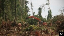Pekerja dengan menggunakan alat berat menebang pohon di hutan Nagan Raya, provinsi Aceh untuk dijadikan perkebunan kelapa sawit (foto: ilustrasi).