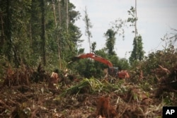 In this Nov. 27, 2011 photo, a machine clears a forest in Nagan Raya, Aceh province, Indonesia to convert it into a palm oil plantation.
