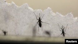 Virus Zika được cho là lây truyền qua muỗi.