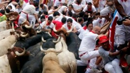 Runners try to escape bulls and steer in a stampede at the San Fermin festival in Pamplona July 13, 2013.