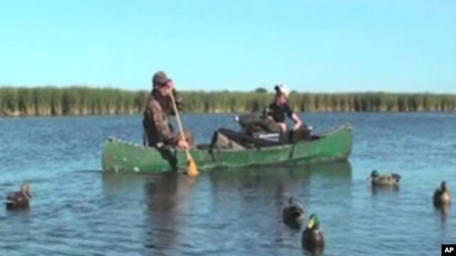 Hunters traditionally use decoys to lure waterfowl - mostly ducks and geese - close enough to shoot.