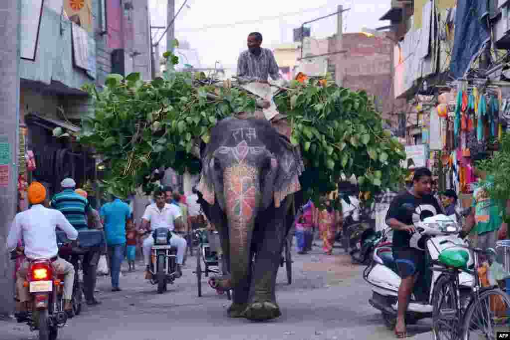 Hindistan - Amritsar küçəsində