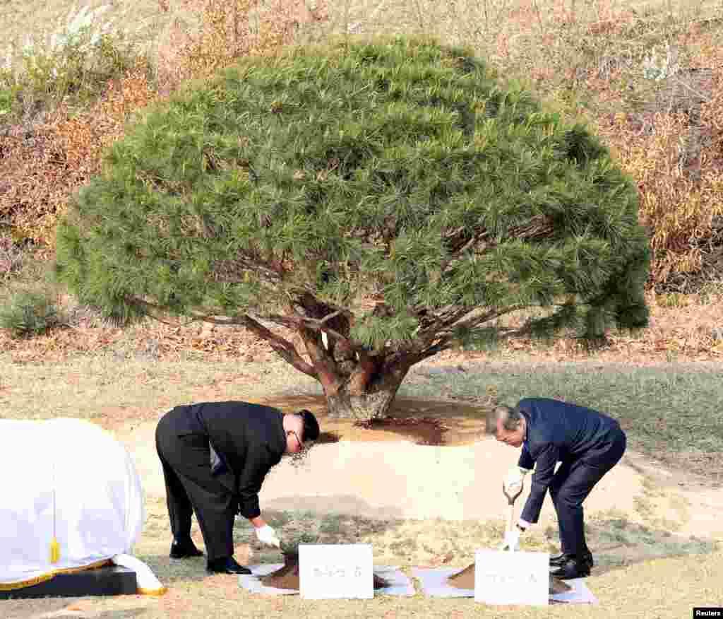 رئیس جمهوری کره جنوبی و رهبر کره شمالی در منطقه ای که این دو کره را از هم جدا می کند، درختی را کاشتند.